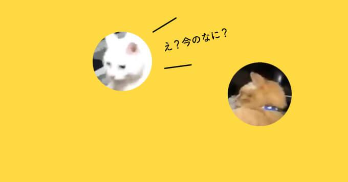 【猫さんどうした!】見た人がみんな「ん?」ってなる猫さん動画が話題です♡