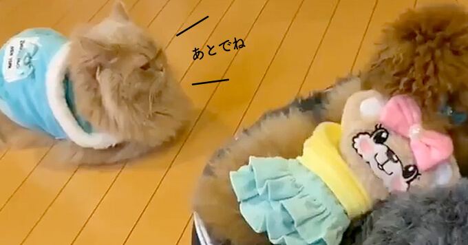 【猫&犬動画】遊ぼ遊ぼ!なわんこさん相手に動じない猫さん♡らしさに癒される~