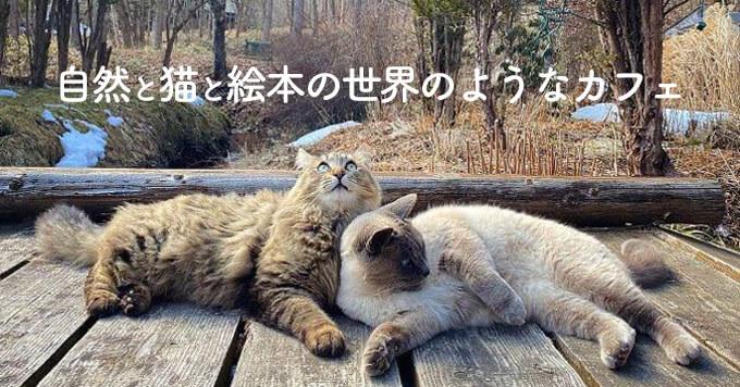 猫さまがゆるりと暮らすカフェ♡まるで絵本の世界です