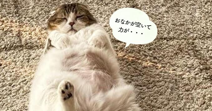 【猫のもふバーチャル】お腹空いた猫さん♡飼い主をキッチンへ可愛く誘導