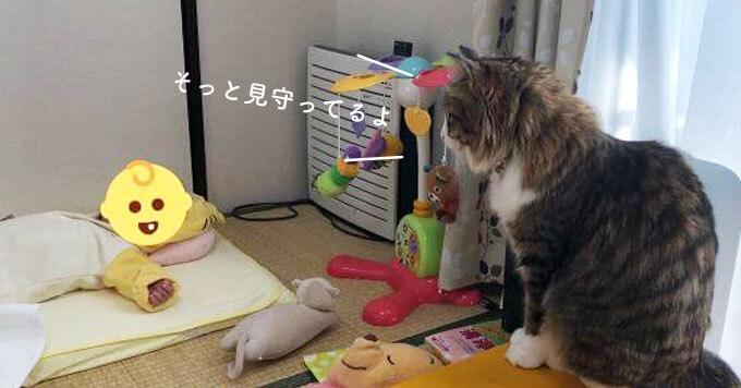 【子守り猫】赤ちゃんの成長を見守る猫さん…1年半後こうなりました
