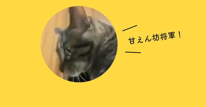【剥がれない猫】連れてってにゃ!飼い主に貼りつく猫さんが癒し~