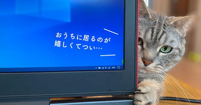 「こんなネコハラなら大歓迎!?」テレワーク中の猫さま事情大特集!