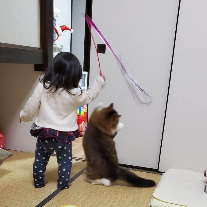 猫じゃじゃさん