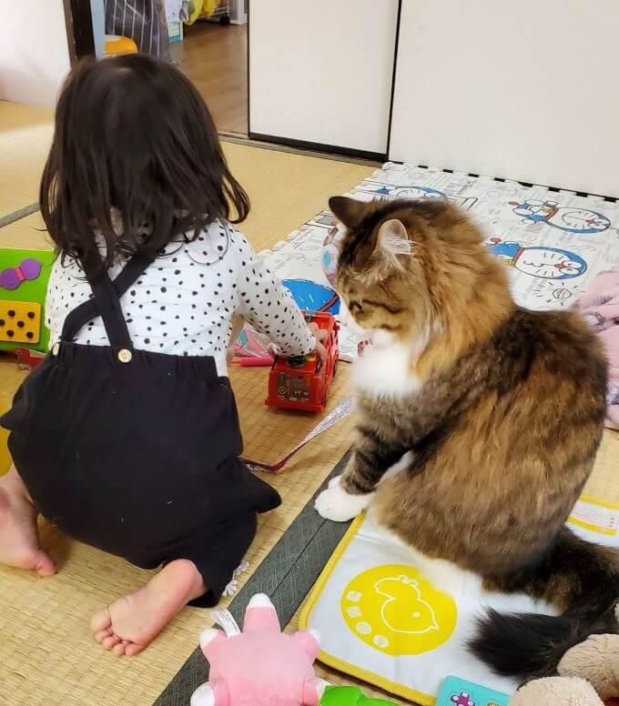 猫じゃじゃさん2-1