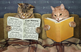 「2019年度一番読まれたのは?」猫ねこ部最新ニュース記事人気BEST10!