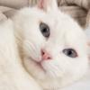 4月6日(しろ)白猫の日】白猫ラバーさん必見の白猫大感謝祭~2020