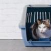 【新型コロナウイルス】今済ませておくべきペットを預ける準備5つのポイント|東京都獣医師会(2020.4.27)