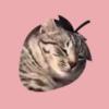 愛媛の新名所?イチゴ農園の看板猫「おもてなし業務」がパーフェクトで大人気