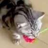 薔薇をくわえた猫さま…お見事なスライディング動画が可愛いすぎる!