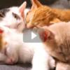 「こんな時だからこそほっと心温まる時間を」猫のライブ配信&YouTubeチャンネルを一挙ご紹介