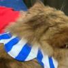 しょんぼり顔の猫さんによる飼い主さんの腕封じ…これは勝てない~♡