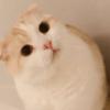 必見♡外出自粛のプロ猫さんから「おうちでの過ごし方アドバイス」頂きました!