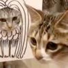 【話題の猫さん】もふもふなアマビエ&それに気付かない猫さんが可愛いすぎる動画