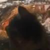 【エアー海外旅行】を楽しむ猫さん!外出自粛の今ぜひ真似したい~