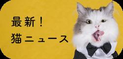 最新猫ニュース