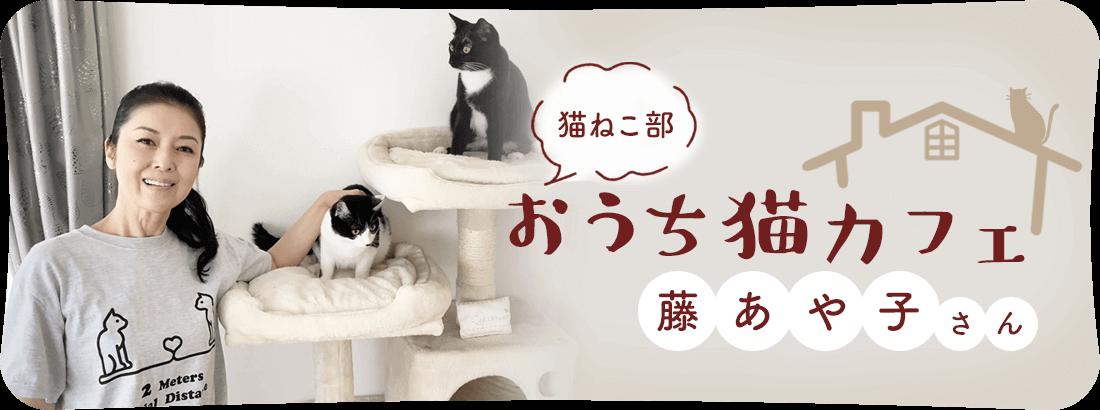 おうち猫カフェ