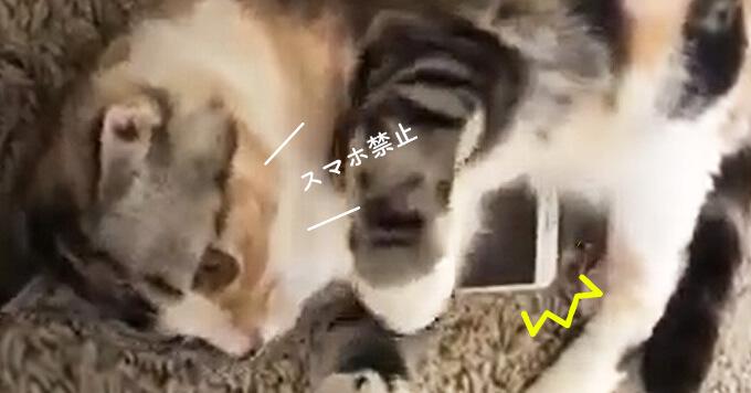 スマホに嫉妬し取り締まる猫さん「ステイホームと言えどいじりすぎにゃよ~」
