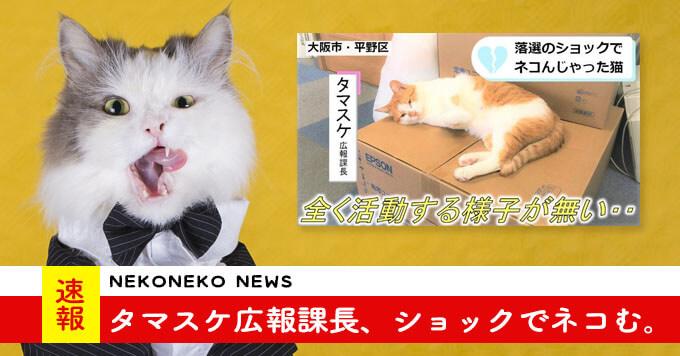 【ネコんじゃった猫】タマスケ広報課長…猫相談員に選ばれず