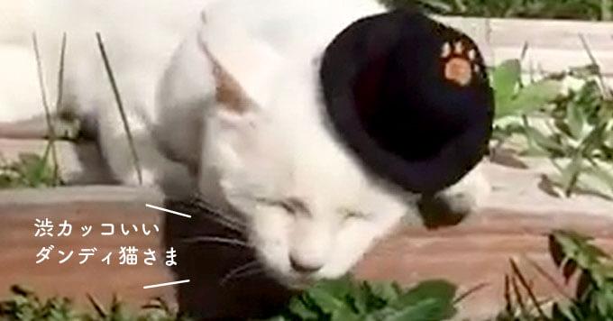 猫界にジュリー現る!?元野良さん…今ではすっかりダンディ猫さん!