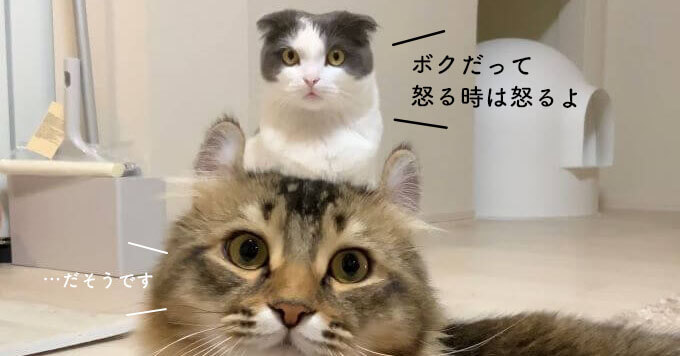 【激おこプンプン!ぷんすか猫】掃除機への怒りが可愛さ満点~