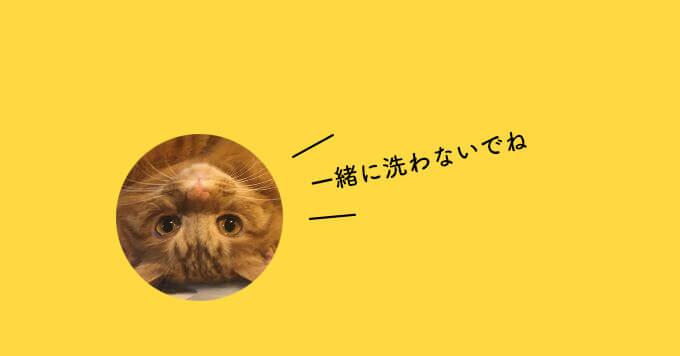 洗濯機でくつろぐ猫さん!多頭飼育崩壊の現場からやってきたもふもふ王子~