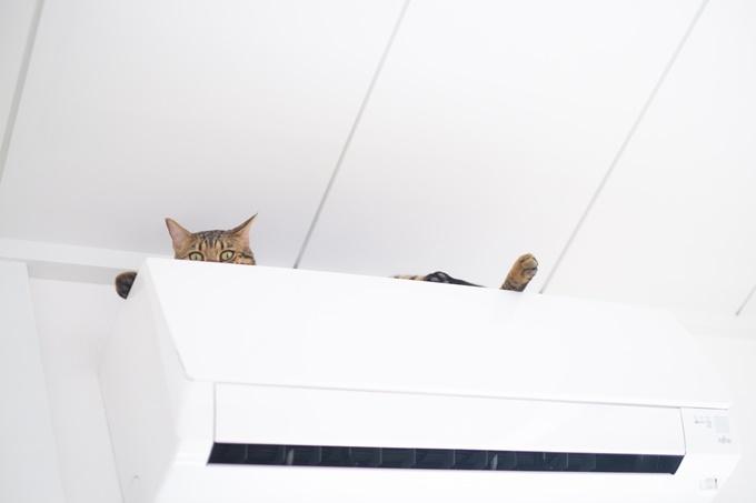 猫_エアコン