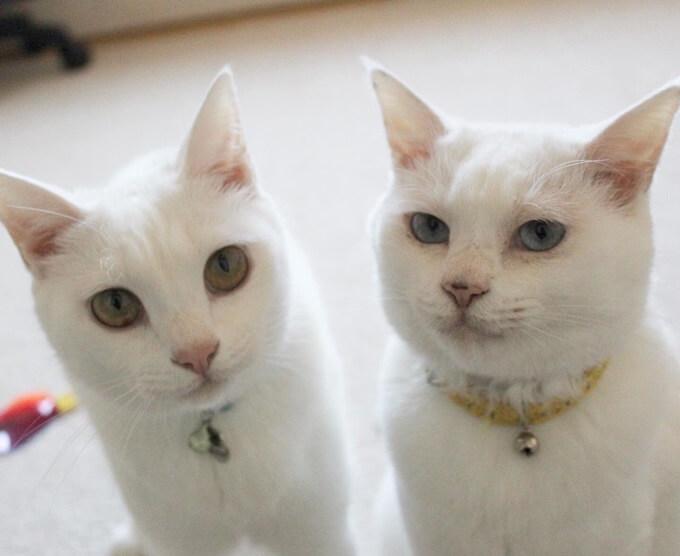 ぷー&リリー