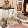 「長年暮らしてもまだよく分からないところがたくさん!」~川井いねこさんちの猫まみれライフ