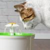 猫が水を飲まない!上手く水を飲ませる方法とは?