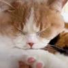 【癒しのパワーサウンド】おうち時間に延々聞いていたい猫の「ゴロゴロ音」大特集!