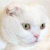 もふもふな謎猫さん~とうとう「白タランチュラ」に…!