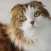 もふもふ猫さんのヤバい顔が話題【普段は美少年】ギャップ萌え!