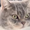 【目からウロコ】テレワークを邪魔する猫対策がバズり中「収納しちゃえ^^」