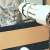 ひょっこり猫隊長に癒される人続出!アイデア満載の【猫戦車】特集