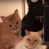 【猫さんどいておくれ】宅配のダンボールの上で3密をつくる猫が話題です