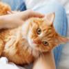 5月25日はホゴネコの日!【愛され保護猫さん大特集】