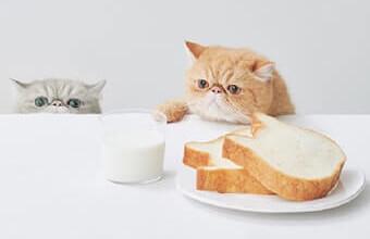 【フォローするだけで猫助け】高級食パン「ねこねこ食パン」が保護猫支援活動を開始