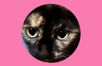 【お返事上手の猫さん】可愛い「ニャ!」でお話し相手になってくれる動画が話題