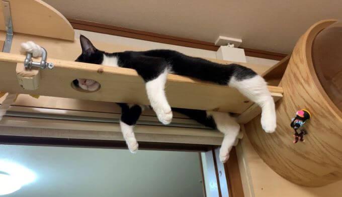 ひのき猫2