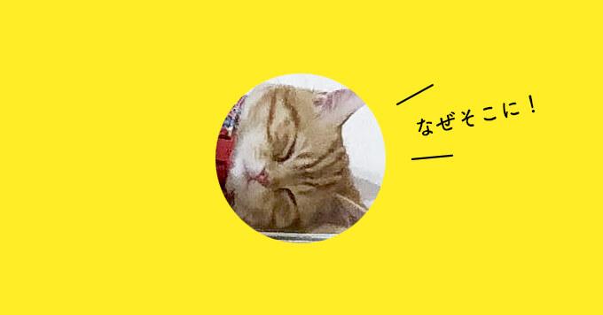 猫さんどうした?!思考を全部もってく猫さんが可愛くて二度見~