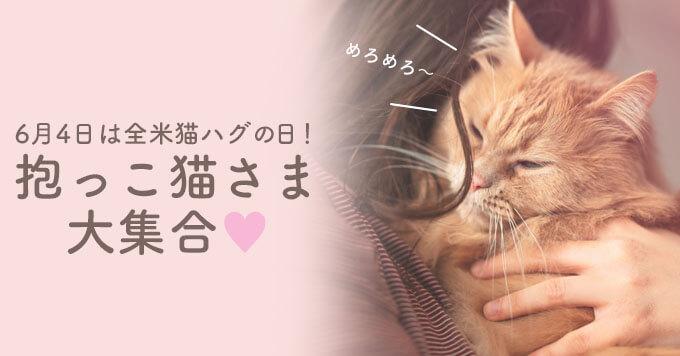6月4日は全米猫ハグの日!【抱っこ猫さま大集合】