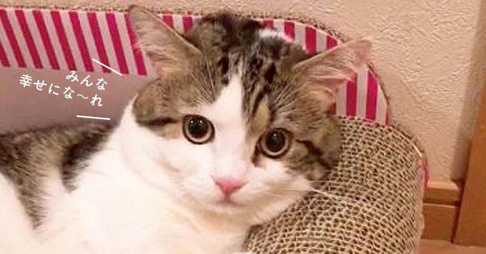 【癒しの猫動画】みんなをまったり幸せにしてしまう猫さんが人気です