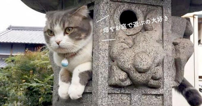 「まだ遊びたいにゃ」捕獲されちゃった猫さんがせつなかわいい~!