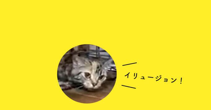 【猫は溶ける説】これが大人気の溶け猫さん!保護猫5姉妹の末娘~