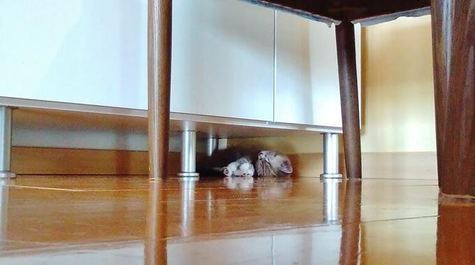 家具の隙間に入り込む猫