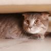 今すぐにできる「住まいの備え」~災害時に大切な猫を守るために~