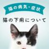 猫の下痢の原因とは?病院に連れていくべきか見極める8つのポイント