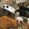 【動物の虐待罰則強化へ】6月1日に改正動物愛護法が施行