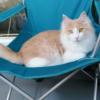 ベランダキャンプを楽しまれるもふ猫さん~ほっこりキャンパー~